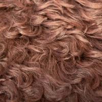 Curly Sheep thumbnail